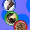 Rotosferas de animales